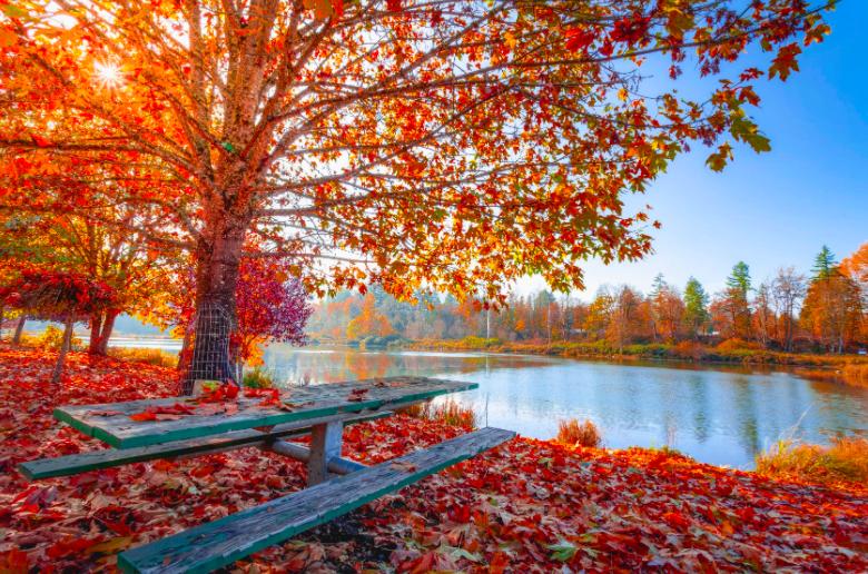 8 Fall Activities Every Team Will Enjoy